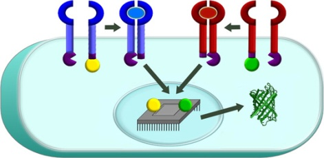 building-smart-cell-based-therapies-header