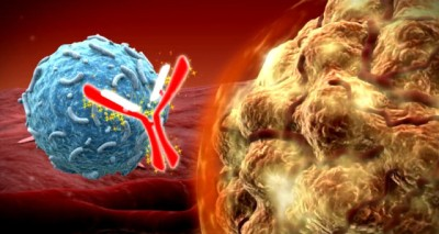 Immune-System-Drugs-Melt-Tumors-In-New-Study-Leading-A-Cancer-Revolution-640x341