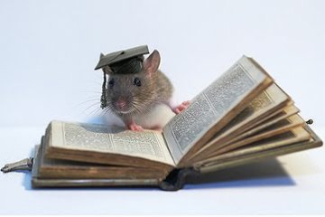 smart_rat2